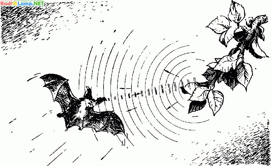 Радиолокация и летучие мыши